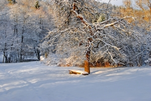 Fischbach tief verschneit_31