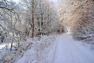 Fischbach tief verschneit_36