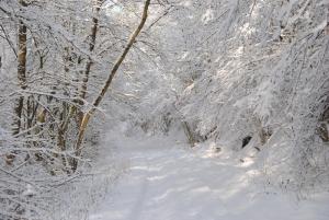 Fischbach tief verschneit_46