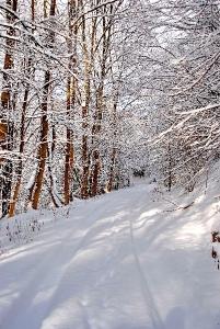 Fischbach tief verschneit_49