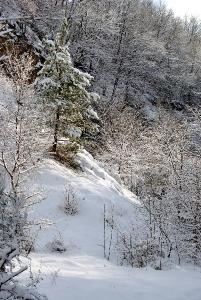 Fischbach tief verschneit_53