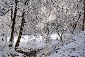 Fischbach tief verschneit_54