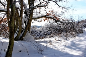 Fischbach tief verschneit_62