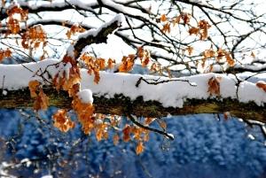 Fischbach tief verschneit_66